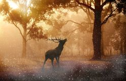 Beautiful, proud wild reindeer in the forest Stock Photo