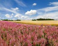 Beautiful provencal landscape Royalty Free Stock Photo