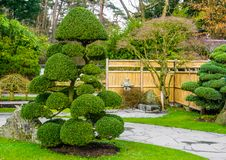 Beautiful pruned tree in a japanese garden, topiary art forms, Gardening in Asian tradition. A Beautiful pruned tree in a japanese garden, topiary art forms royalty free stock photo