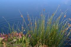 beautiful puddle Στοκ εικόνες με δικαίωμα ελεύθερης χρήσης