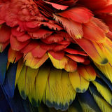The Beautiful Puffy feathers of Scarlet Macaw parrot bird, color Royalty Free Stock Photo