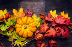 Beautiful pumpkin on colorful autumn leaves, dark wooden background Stock Photos