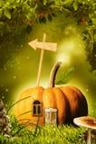 Beautiful pumpkin in fantastic wood royalty free illustration
