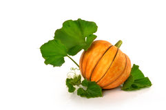 Beautiful pumpkin with leaves on a white background Stock Image