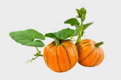 Beautiful pumpkin with leaves on a white background Stock Photos