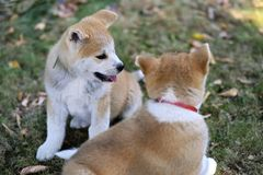 Beautiful puppies playing in garden royalty free stock photo