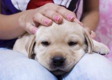 Beautiful puppy Stock Photos
