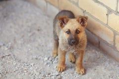 Beautiful puppy dog Shepherd photographed. Close up royalty free stock photos