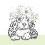A beautiful puppy in a flower wreath. A pedigree dog in a wreath of lilies. Vector illustration for a postcard or a poster. A beautiful puppy in a flower wreath Royalty Free Stock Photo
