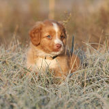 Beautiful Puppy Sitting In Soft Rime Royalty Free Stock Photo