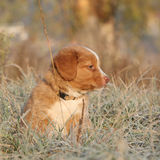 Beautiful puppy sitting in soft rime Stock Images