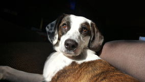 Beautiful puppy Stock Photography