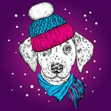 A beautiful puppy in a winter hat and scarf. Pedigree dog. Dalmatian.  Stock Images
