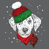 A beautiful puppy in a winter hat and scarf. Pedigree dog. Dalmatian.   Royalty Free Stock Photo