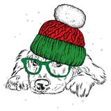 A beautiful puppy in a winter hat and scarf. Pedigree dog. Labrador or spaniel.. Vector illustration for a postcard, poster, print for clothes or accessories Royalty Free Stock Photos