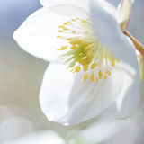 Beautiful pure fragile spring blossom Stock Photos