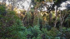 Landscape of Masoala National Park, Madagascar stock video footage