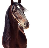 Beautiful purebred Andalusian stallion at flowers background. Sp Stock Photo