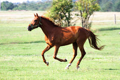 Beautiful purebred horses see more in my portfolio Stock Images