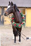 Beautiful purebred saddle horse wearing colorful christmas wreath on advent weekend at rural equestrian club. Dreamy image of a saddle horse wearing a beautiful royalty free stock photo