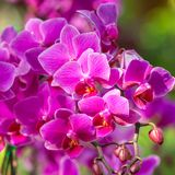 Beautiful purle orchid flowers Royalty Free Stock Images