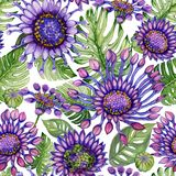 Beautiful purple African daisy flowers with green monstera leaves on white background. Seamless bright floral pattern. Watercolor painting. Hand painted royalty free illustration