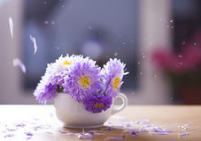 Beautiful purple aster flowers and falling petals Royalty Free Stock Photo