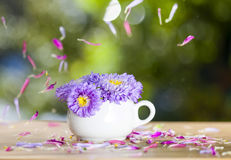 Beautiful purple aster flowers and falling petals Stock Photo