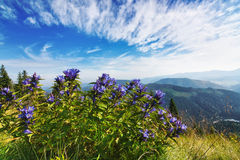 Beautiful purple bouquet of flowers in a landscape. Royalty Free Stock Photos