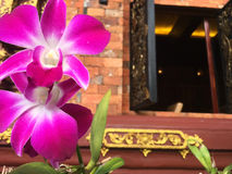 Beautiful purple branch of orchids on the red brick wall. Stock Image