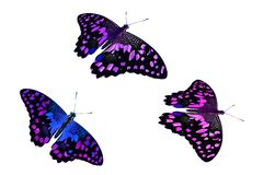 Beautiful purple butterflies. isolated on white backgroun stock photo