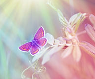 Beautiful purple butterfly lit by sun light. On spring grass royalty free stock photos