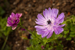Beautiful purple flower. Soft focus close-up view stock images