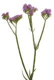 Beautiful purple flower Stock Photos