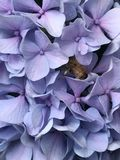 Beautiful purple flower with bee collecting pollen. Beautiful purple flower and a bee collecting pollen Royalty Free Stock Image