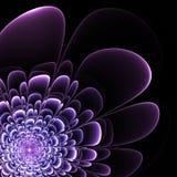 Beautiful purple flower on black background. Royalty Free Stock Image