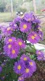Beautiful purple flower. In field stock image