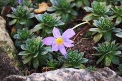 Purple flower in the garden stock photo