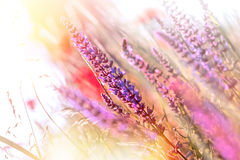 Beautiful purple flower Stock Images