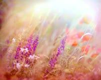Beautiful purple flower in meadow Stock Images
