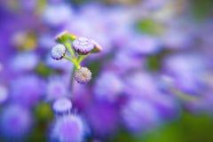 Beautiful purple flower petals closeup -depth of f Stock Photos