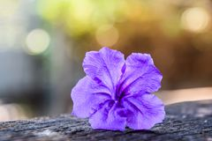 Beautiful Purple Flower - Popping pod on Blurred Bokeh Nature Background stock images