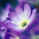 Beautiful purple flower. Shallow depth of field Stock Photography