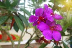 Beautiful Purple Flower Royalty Free Stock Photo