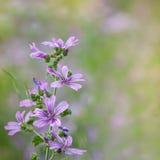 Beautiful purple flowers Royalty Free Stock Photo