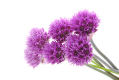 Beautiful purple flowers. Bunch of beautiful purple flowers isolated on white background Stock Photography