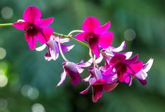 Beautiful tropical purple flowers Royalty Free Stock Photo