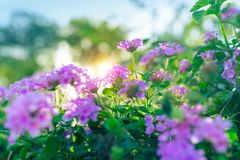 Beautiful purple flowers Stock Image