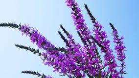 Beautiful purple flowers. Beautiful purple flowers on a blue sky background stock photos