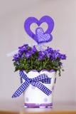 Beautiful purple  flowers in ceramic decorative pot Royalty Free Stock Photos
